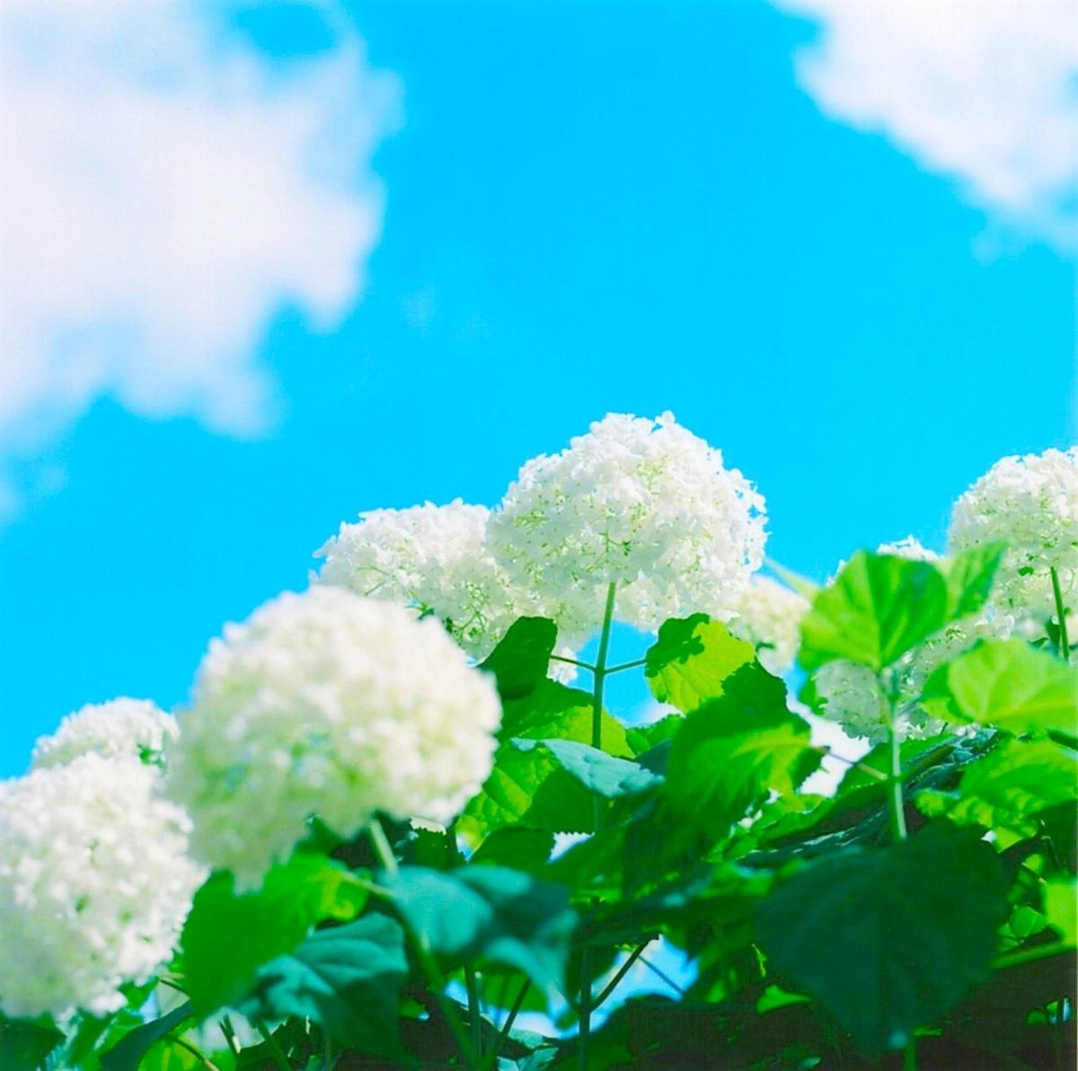 f:id:camera-yurucamp:20190624103631j:plain