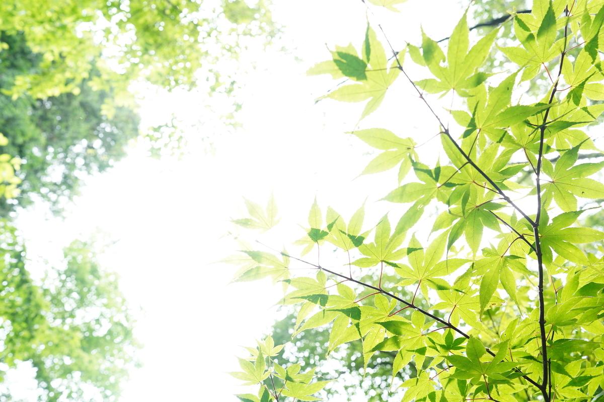 f:id:camera-yurucamp:20210805090342j:plain