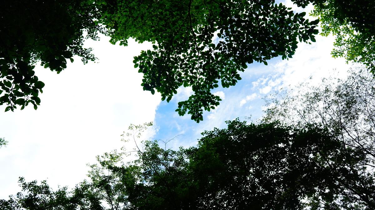 f:id:camera-yurucamp:20210807133748j:plain